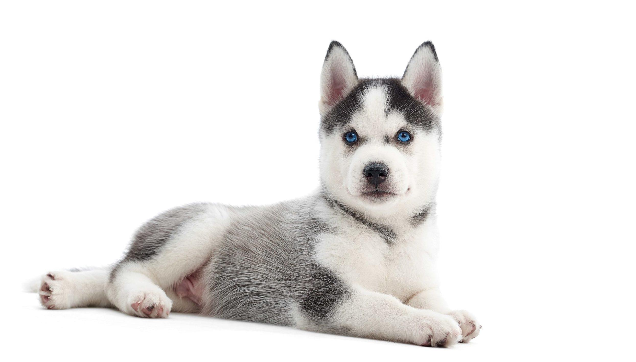 castración de cachorros en cádiz
