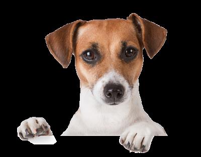 veterinario en cadiz urgencias