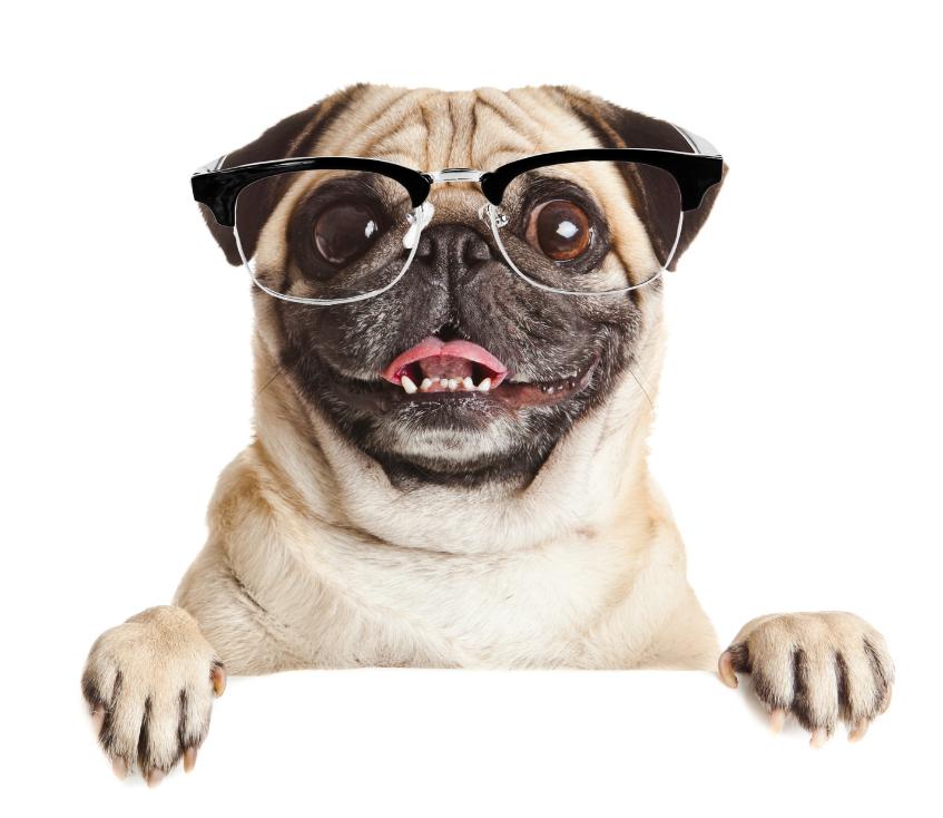 snack para mascotas veterinario en cadiz