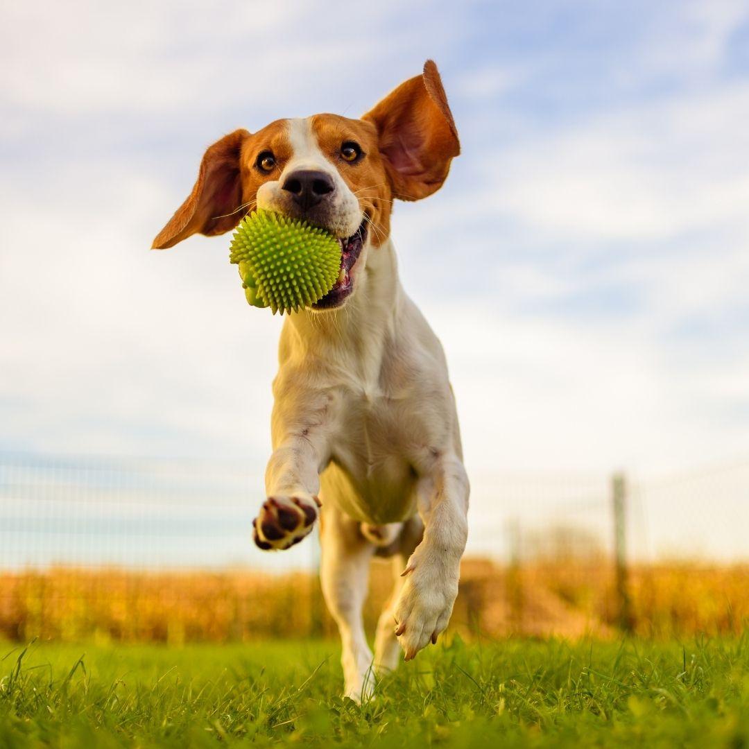 parque para perros en cádiz veterinario a domicilio