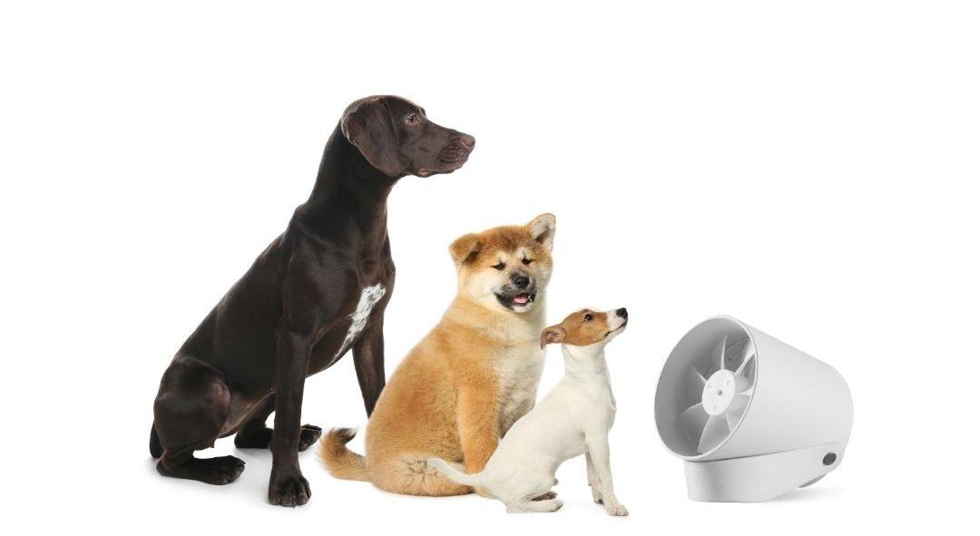 golpe de calor en perro verano