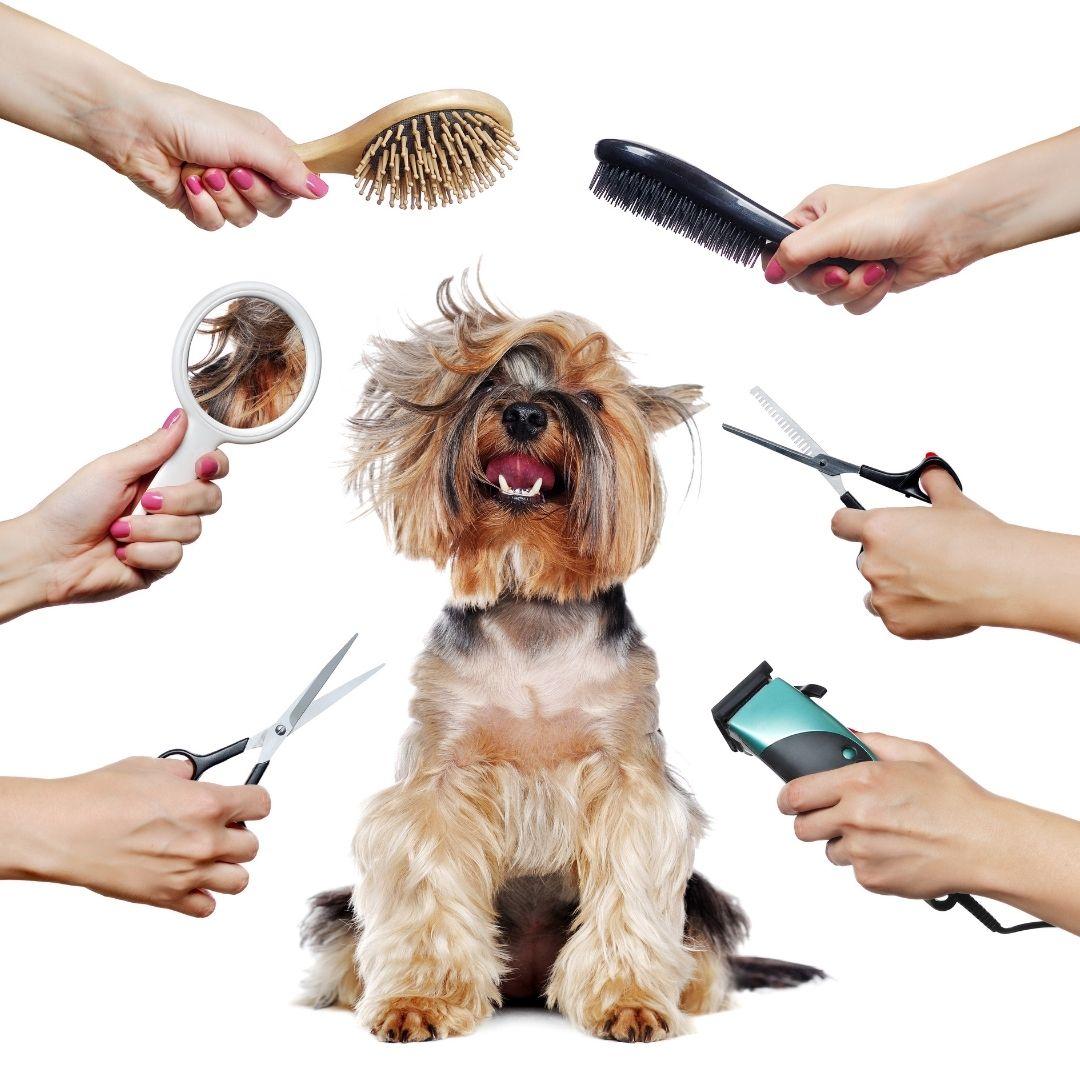 peluqueria canina en cadiz