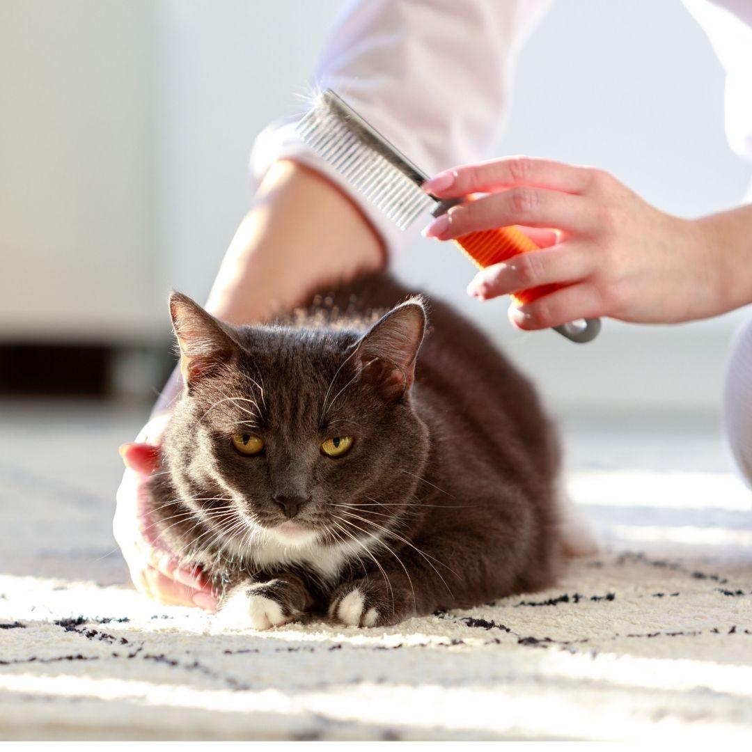 bolas de pelos en gatos como evitar las bolas de pelos